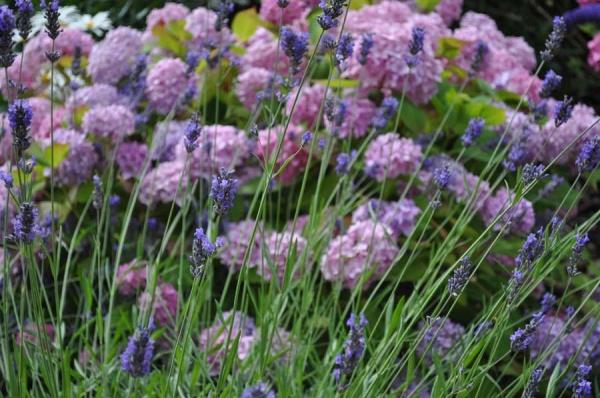 Summer flowers in purple