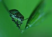 Summer bug Macro photography